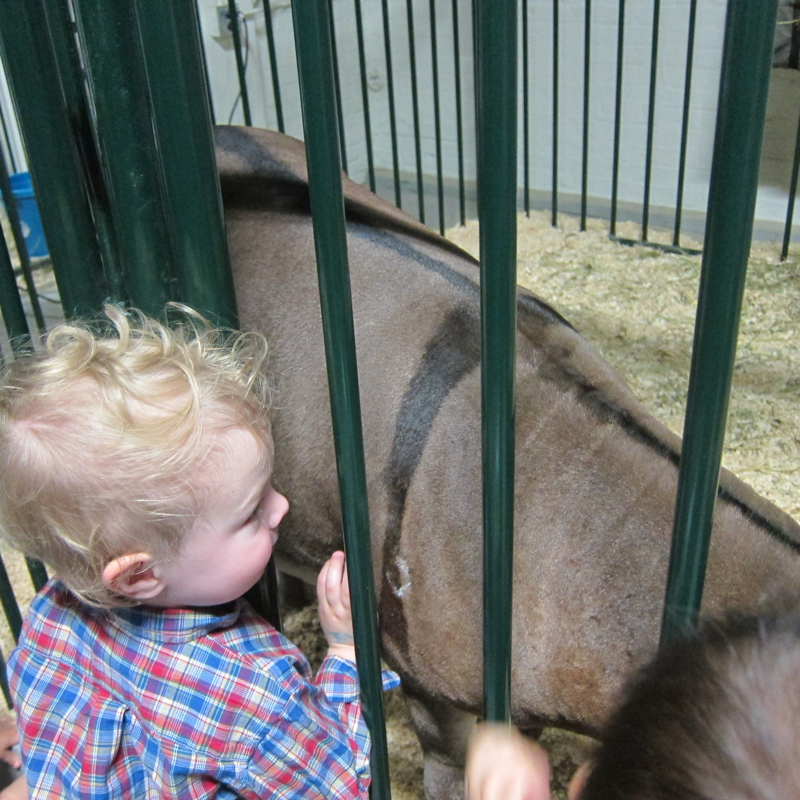 Max loved petting all of the animals at the Calgary Stampede!