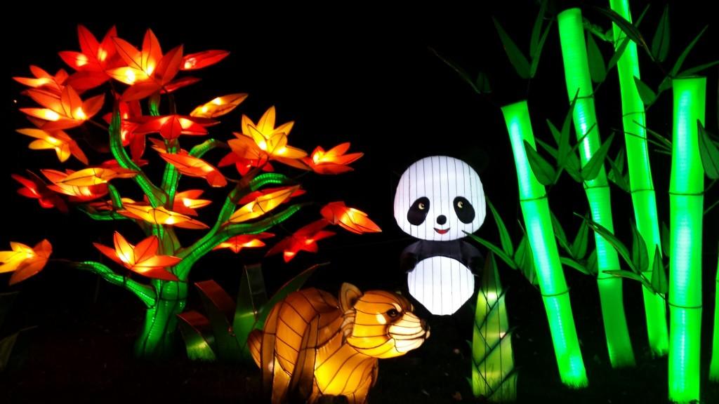 Pandas_Calgary_Zoo_ILLUMINASIA