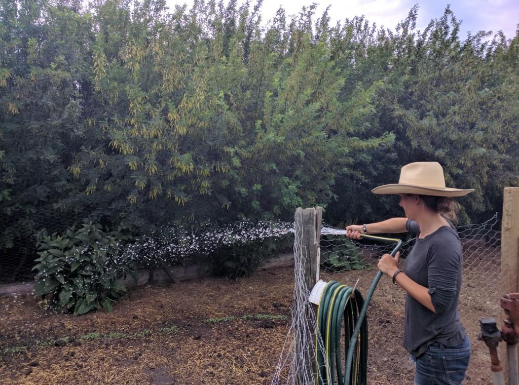 Rachel Herbert, grassfed cattle rancher, watering a newly planted garden.