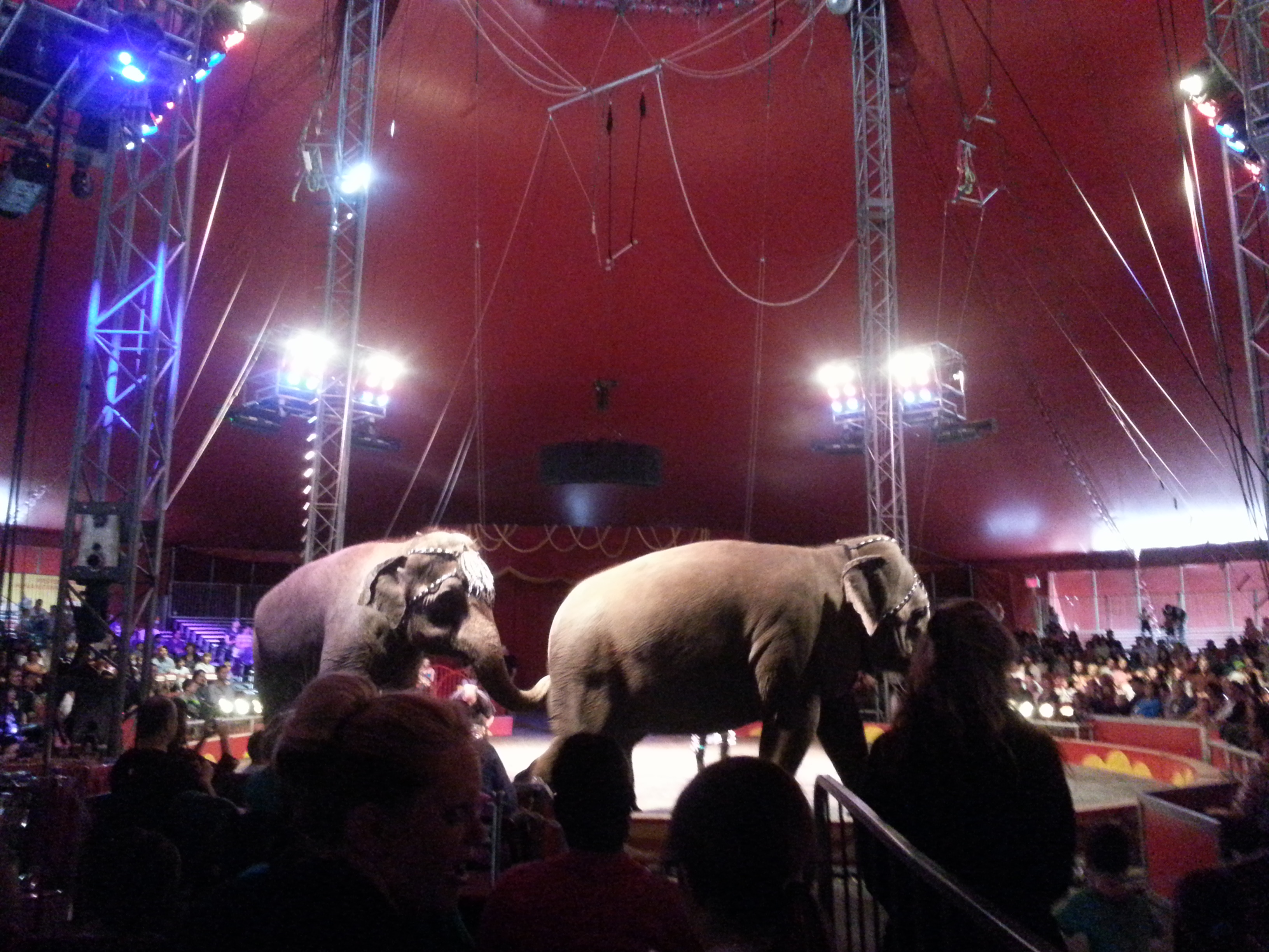 Elephants-Royal-Canadian-Circus-LWWA